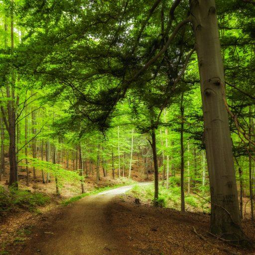 bosque polaco